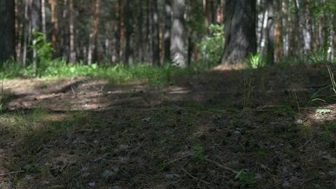 Pine Cones 2 Footage