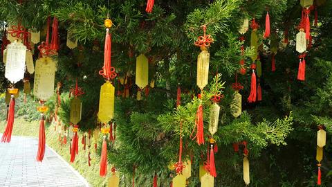 Taiwanese wishing tree with colorful pendants Footage