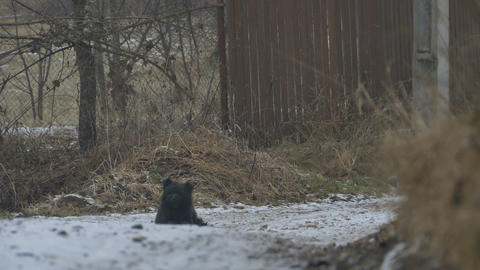 Dog Sits on Winter Road Footage