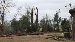 Tornado damage - snapped trees Footage
