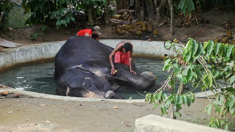 Indian Men Wash with Brushes Elephant in Round Pool Footage