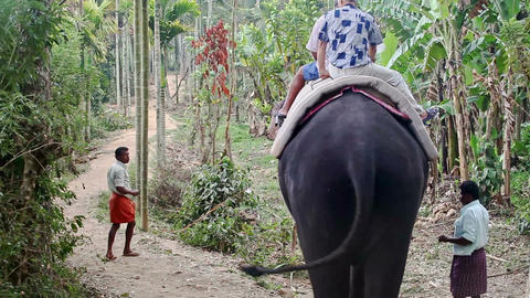 Two Old Men Tourists Sit on Elephant Start Go to Jungle Footage