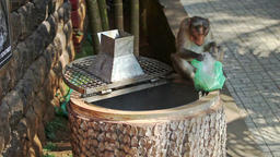 Monkey Climbs out of Dust-bin Holds Bag in Park Footage