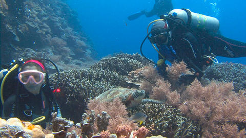 Fascinating underwater diving with sea turtles in the reef to Blue corner of Pal Footage