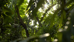 Sun Shining Through a Tropical Jungle - Dolly Tracking Shot Stock Video Footage