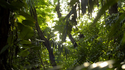 Sun Shining Through a Tropical Jungle - Dolly Tracking Shot Footage