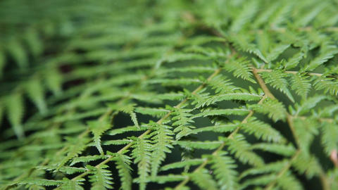 Fern leaves background Stock Video Footage