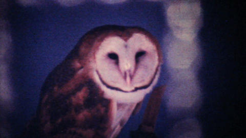 Colorful Parrot And Barn Owl 1979 Vintage 8mm film Footage