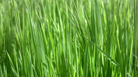 Background with grass Stock Video Footage