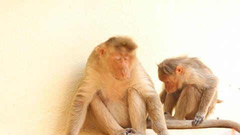 scene care for a couple of monkeys Live Action