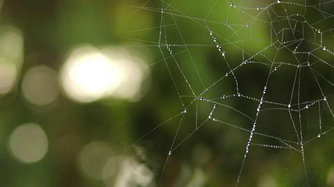 Spider Web 0