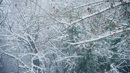 Heavy Snowing Footage