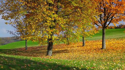 City park with autumn colors Footage