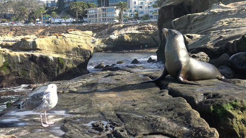 Seal rookery on the waterfront of San Diego. California Footage