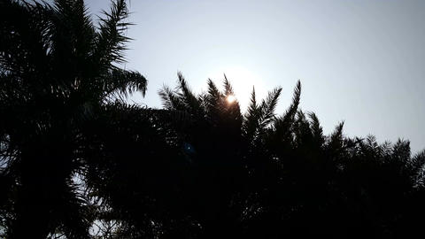 Sunbeams behind palm trees Live Action
