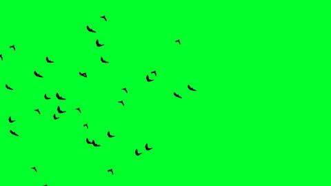 Flying Bats 08 Footage