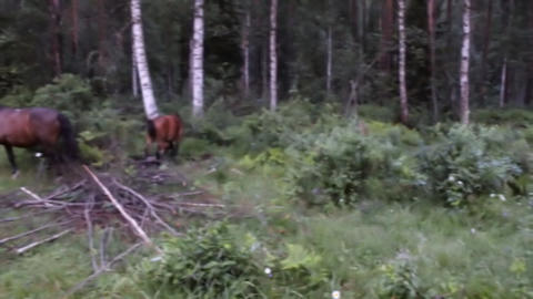 three animals horses group in green forest Live Action