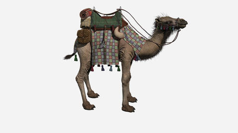 camel with loaded , animation, white background Animation