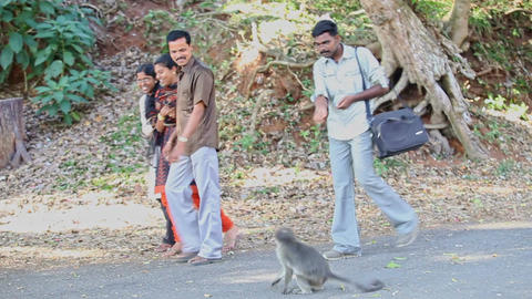 Tourists Men Girls Walk Watch Feed Monkey on Pathway in Park Footage