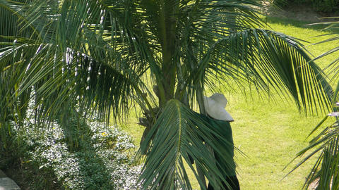 Worker cuts off palm branches Footage