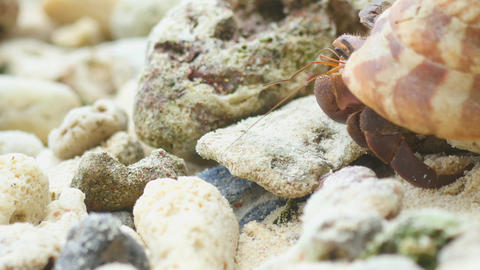 Hermit crab crawling on the beach Footage