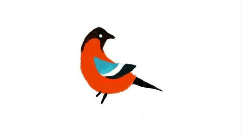 Process of drawing of a bird bullfinch Animation
