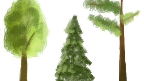 We draw trees Animation
