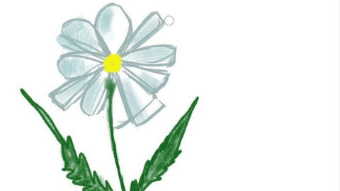 Digital drawing of a flower, Timelapse Animation