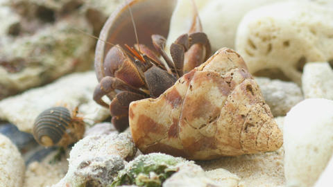 Hermit crab on the beach Footage