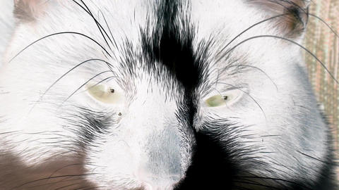 Cat Eyes with inversion filter Footage