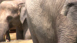Closeup of two elephants in Sri Lanka Stock Video Footage