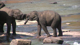 Two young elephants play in the river Stock Video Footage