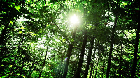 Sun Rays In The Forest stock footage