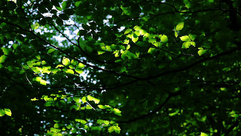 Leaf background: forest, sunbeams and shade Stock Video Footage