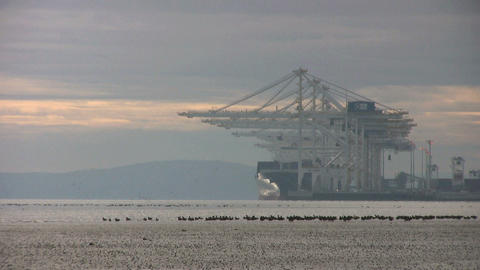 Birds In The Port Stock Video Footage