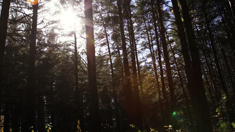 Traveling in a dark forest Stock Video Footage