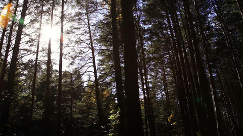 Traveling In A Dark Forest stock footage