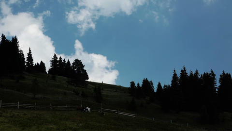 Cows and clouds Stock Video Footage
