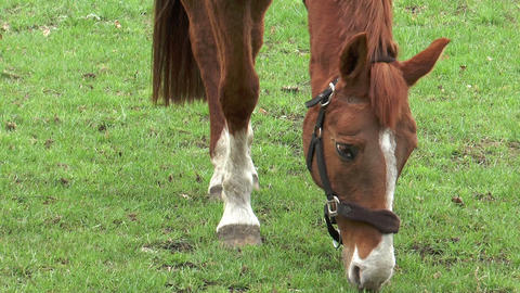 horse grazing close up Stock Video Footage