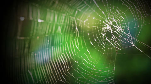 Forest web Stock Video Footage