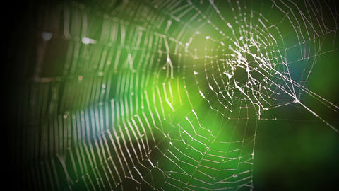 Forest Web stock footage