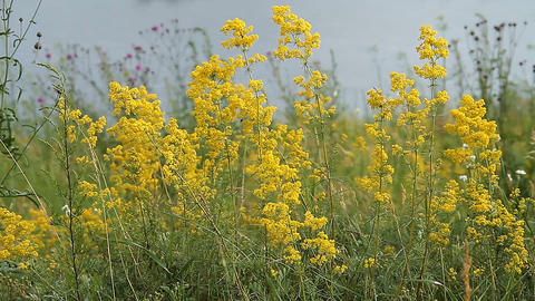 Meadow with flowers Stock Video Footage