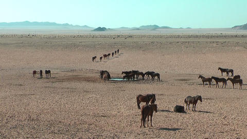 Namib desert horses in Namibia,Africa Stock Video Footage