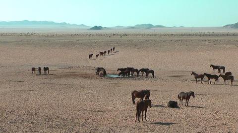 Namib desert horses in Namibia,Africa Stock Video Footage
