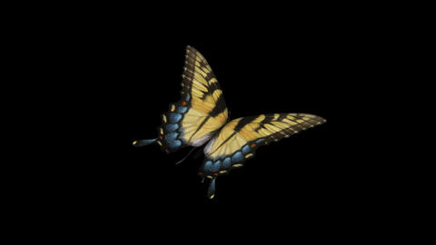 Swallowtail Butterfly I - Back Angle Close-Up Loop + Alpha Animation