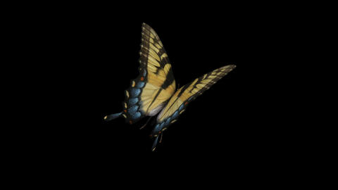 Swallowtail Butterfly I - Back Angle Close-Up Loop + Alpha Stock Video Footage