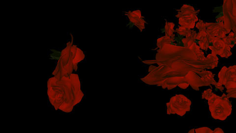 Red Roses - Transition + Alpha stock footage