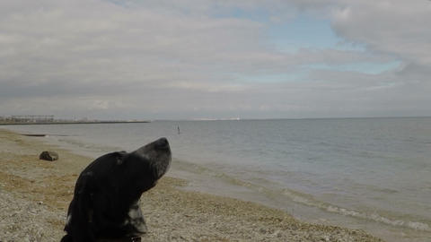 Dog on the beach catching a piece of food Footage