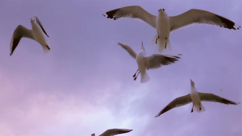 Seagulls Flying at Sunset Footage