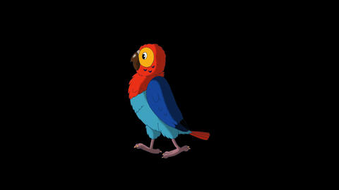 Colorful parrot walks and stops HD alpha channel Animation